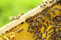 Schuhcreme mit Bienenwachs: Ein hochwertiges und gutes Erzeugnis
